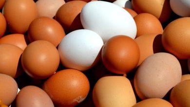 Kopa vajec